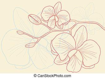 orquídea, flores