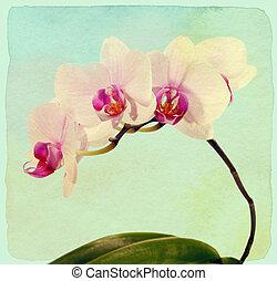 orquídea, flower., vendimia, retro, style., papel, textured.