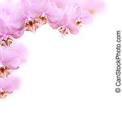 orquídea, frontera