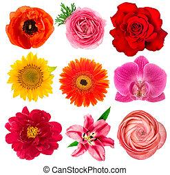 orquídea, lirio, flor, ranunculus, heads., gerber, solo,...
