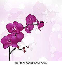 orquídea, púrpura