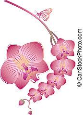 orquídea, vector