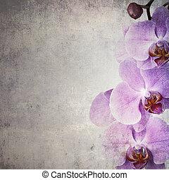 orquídea, vendimia
