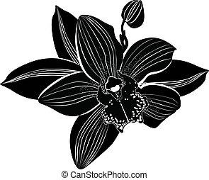 orquídeas, flores, aislado, él