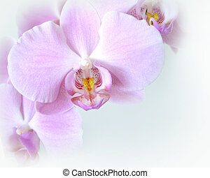 orquídeas, suave, esquina, diseño