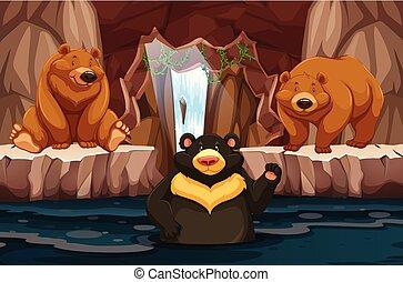 orsi, acqua, selvatico, sotterraneo, caverna