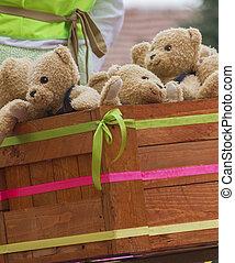 orsi teddy