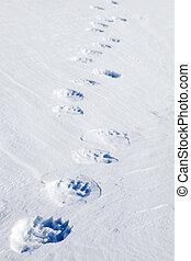 orso polare, piste