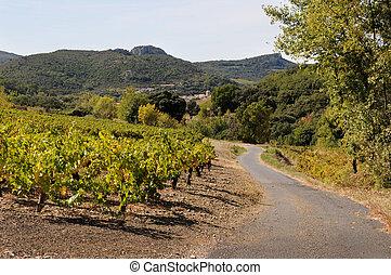 ország, szőlőskert, út