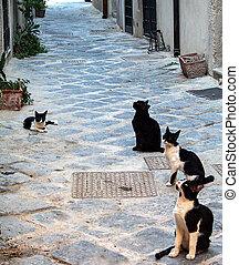 Ortigia island - Cat sitting in a Street in the historical...