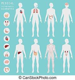 orvosi, és, healthcare, infographic