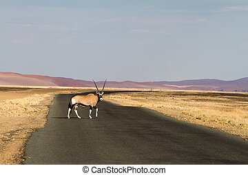 Oryx In the Sossusvlei desert, Namibia