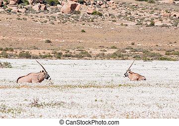 Oryx in white flowers
