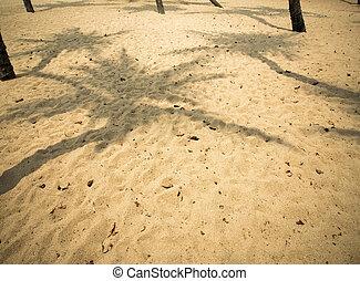 orzech kokosowy, cień, drzewo
