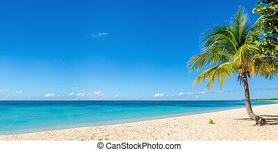 orzech kokosowy, karaibski, wyspa, dłoń, plaża, piaszczysty