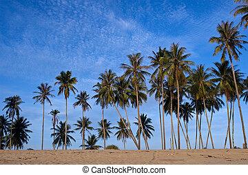 orzech kokosowy, plaża, dłonie
