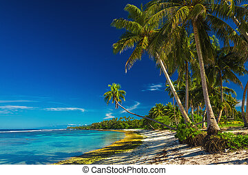 orzech kokosowy, samoa, wyspa, drzewa, tropikalny, dłoń plaża