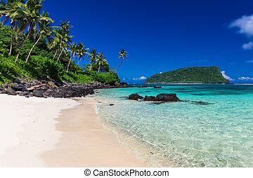 orzech kokosowy, samoa, wyspa, drzewa, tropikalny, lalomanu, dłoń plaża