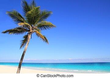 orzech kokosowy, tuquoise, karaibski, drzewa, dłoń, morze
