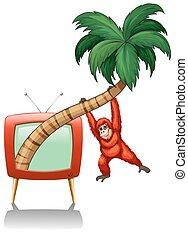 orzech kokosowy, urangutan, gałąź, wisząc