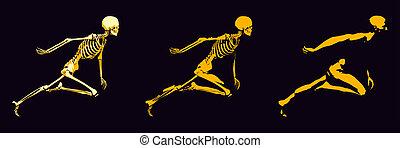 os humain, structure, transparent