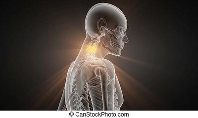 os, radiographic, humain, balayage