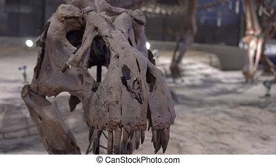 os, rex, crâne, dinosaure, tyrannosaurus