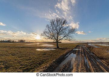 osamělý, strom, field., podzim