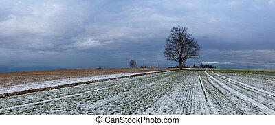 osamělý, winter kopyto, neobsazený, bojiště