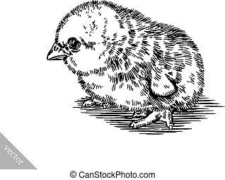 osamocený, ilustrace, čerň, vštípit, kuře, neposkvrněný