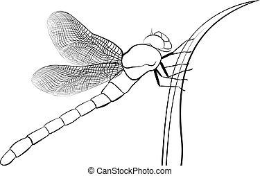 osamocený, neposkvrněný, stylizovaný, hmyz, dravý, šídlo