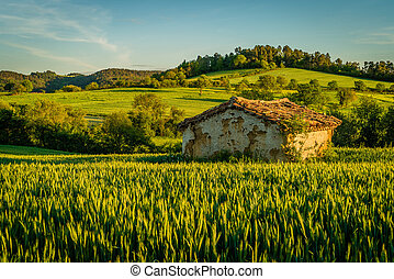 osamocený, nevýznamný skladné, do, jeden, pšenice peloton
