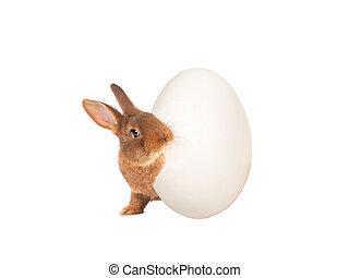 osamocený, velikonoční, vykukovat, neposkvrněný, králíček, vejce, grafické pozadí.