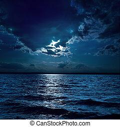 oscurarsi, luce, sopra, luna, acqua, notte