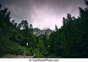 oscuridad, bosque, en, montañas.