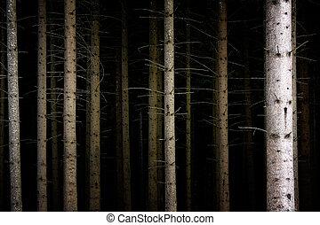 oscuridad, bosque, profundo