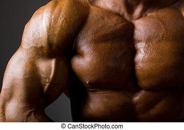 oscuridad, macho, torso, plano de fondo, muscular