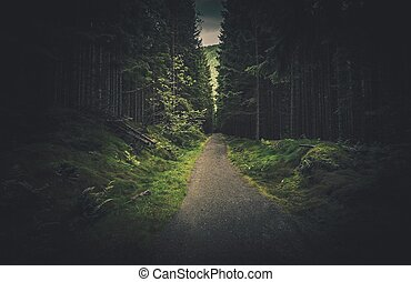 oscuridad, picea, bosque, rastro