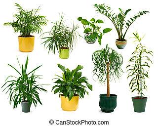 osiem, różny, domowy, rośliny, w, niejaki, komplet