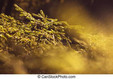 oslňovat, fešný, mládě, semknout se, pod, evergreen, malý, názor, slunit se, ponurý, kopyto ukrýt v lese, -