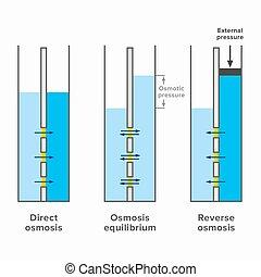 osmosis, plan, renverser, direct, processus