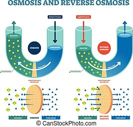 Osmosis reverse vector illustration. Explained process with...