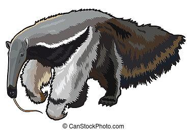 oso hormiguero, gigante