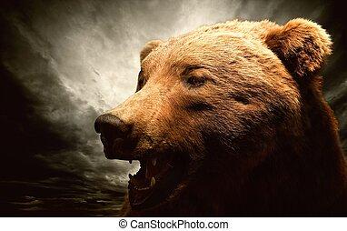 oso marrón, contra, cielo tempestuoso