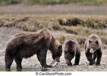 oso pardo, family.