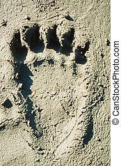 oso pardo, pista, en, suave, mud.