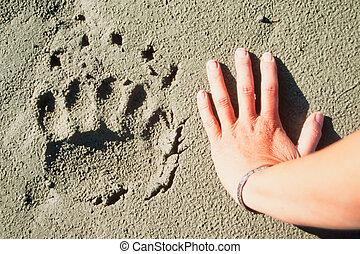 oso pardo, pista, y, humano, mano.