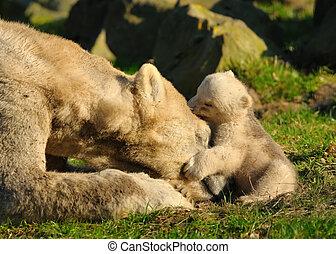 oso polar, y, cachorro