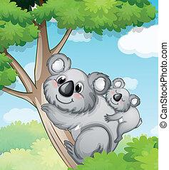 osos, naturaleza