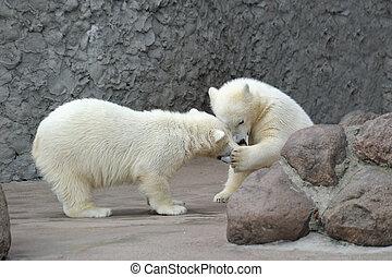 osos, polar, poco, dos, juego
